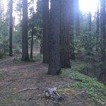 Nelder grove