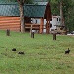 Shenandoah valley campground verona va