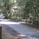 Portola redwoods state park