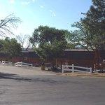 Albuquerque koa