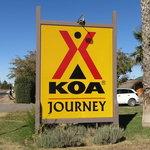 Kingman koa