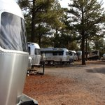 Williams circle pines koa