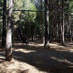 Mt lassen shingletown koa