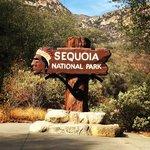 Visalia sequoia national park koa
