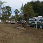 Milton gulf pines koa