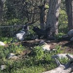 Livingston paradise valley koa