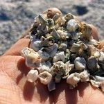 Salt creek beach campground
