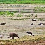 Three lakes wildlife management area