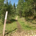 Forest road 568