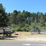 Wild mare horse campground