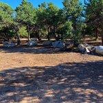 Shavano wildlife management area