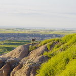 Steer pasture overlook