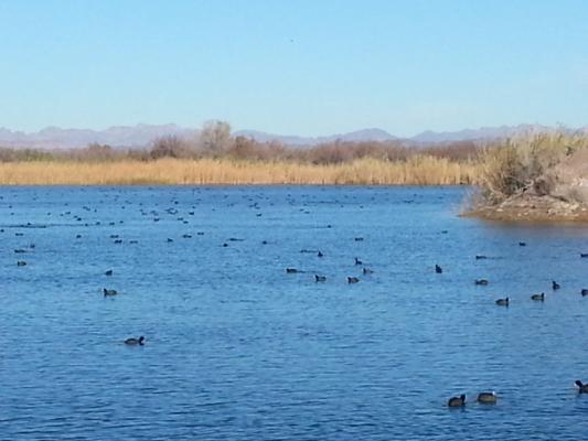 Ferguson lake