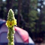 West magnolia campground