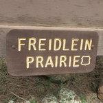 Freidlein prairie