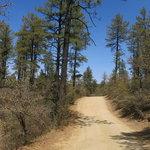 Bannie mine road