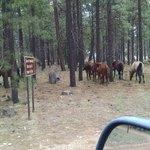 Larson ridge camping area