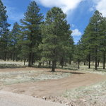 Forest road 545b