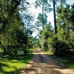 Bayside campground escribano point wma