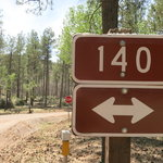 Forest road 140