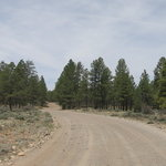 Forest road 306