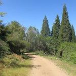 Abbott creek camping area