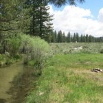 Robinson creek california