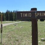 Timid springs