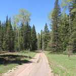 Forest road 137