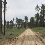 Forest road 225