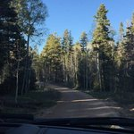 Forest road 611 east rim