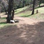 Tehachapi mountain park
