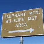 Elephant mountain wma