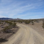 Ocotillo grove