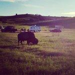 Sage creek campground badlands np