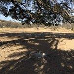 Oak tree canyon