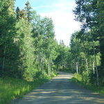 Forest road 665 gravel pit