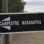 Campestre maranatha