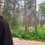 Ellison provincial park