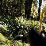 Pine point site