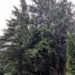 Wild rose rv park british columbia