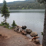 Little bear campground grand mesa nf