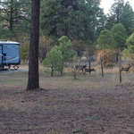 Mountain landing suites rv park