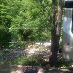 Laurel creek rv park