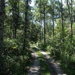 Alcona primitive campsite 4