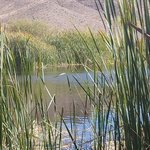 Bombo s pond