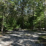 White cedar horse camp