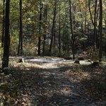 Curtis creek road