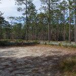 Milton Gulf Pines Koa Reviews
