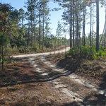 Pine creek landing